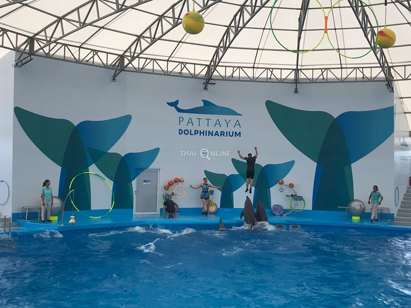 Discount Pattaya Dolphin Show Tickets