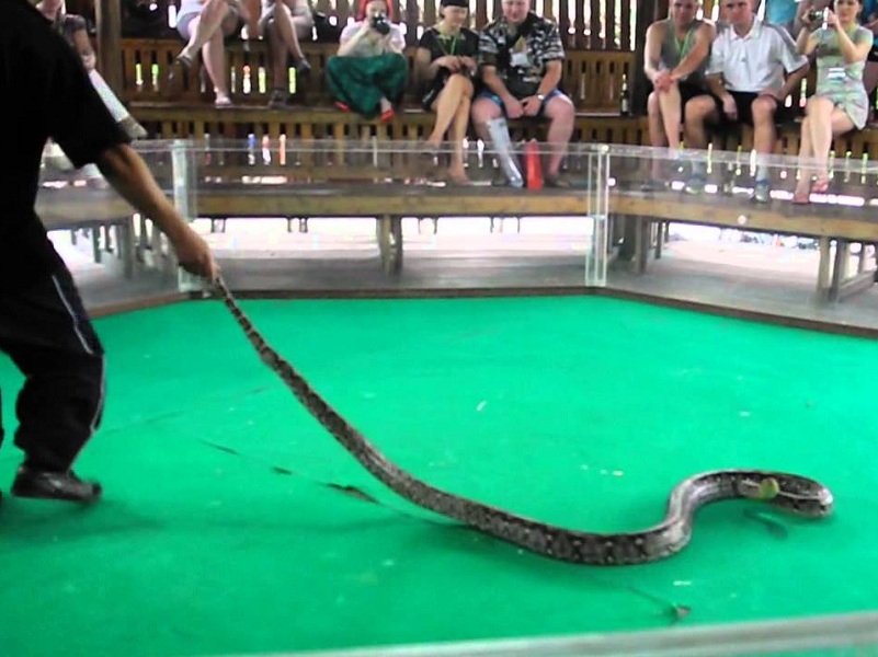 Snake Show Pattaya