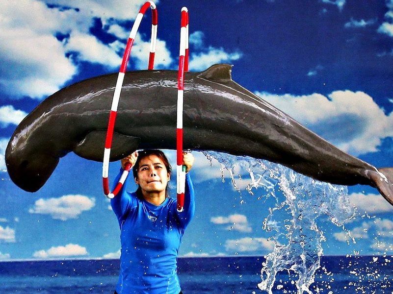 Pattaya Dolphin World Show