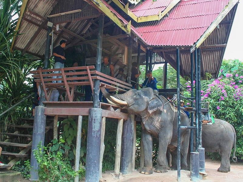 Elephant Village Trekking Combo